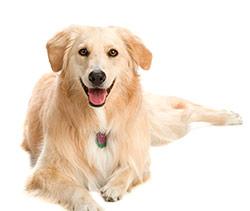 Trucos para adiestrar perros